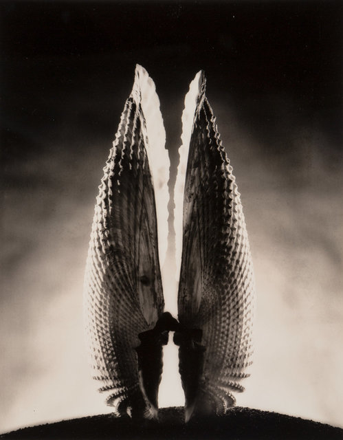 Ruth Bernhard, 'Angel Wing', 1943-printed later, Heritage Auctions
