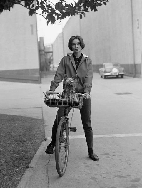 Sid Avery, 'Audrey Hepburn on her bike at Paramount Studios', 1957, Photography, Gelatin Silver Print, Staley-Wise Gallery