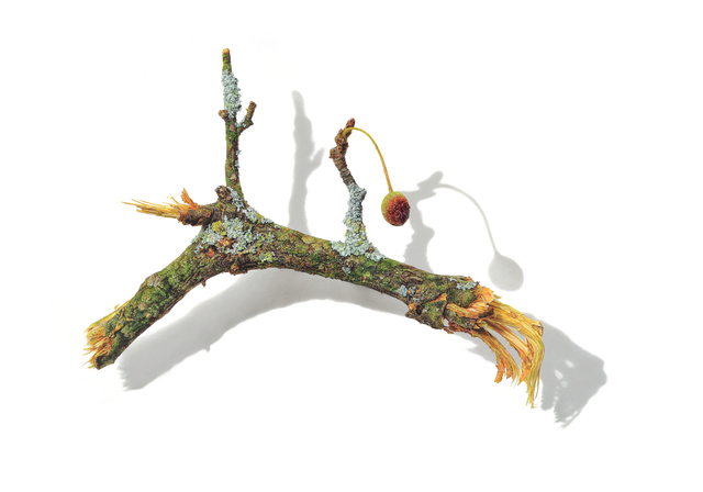 , 'Lichen Stick,' 2018, Garvey | Simon