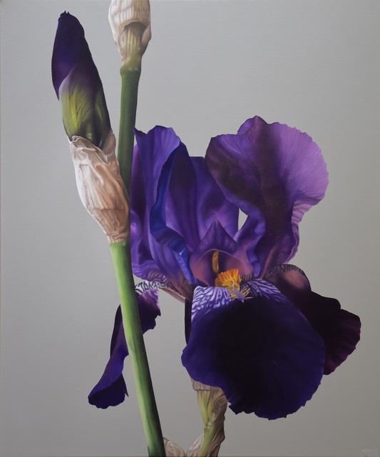 , 'Iris,' 2017, Gallery 133