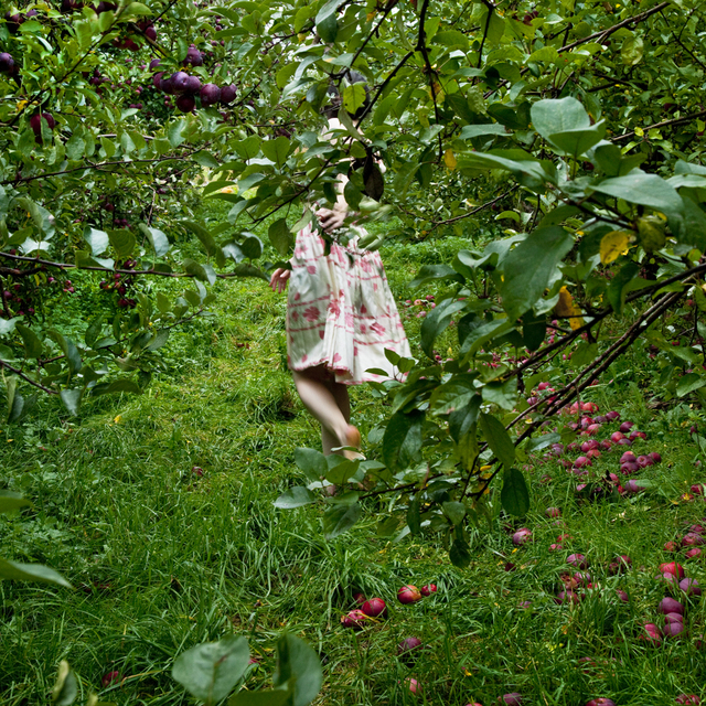 , 'The Orchard, Warren, Maine,' 2012, Robert Klein Gallery
