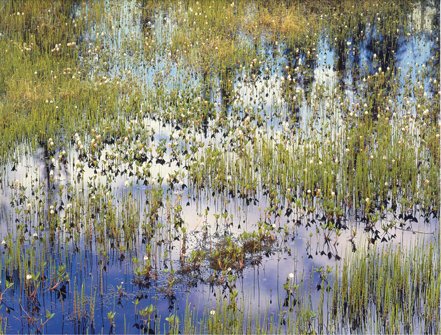 Christopher Burkett, 'Spring Pond and Reflections, Alaska', n.d., Photography, Cibachrome print, Etherton Gallery