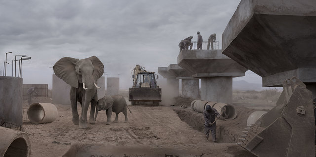 Nick Brandt, 'Bridge Construction with Elephants & Excavator', 2018, Fahey/Klein Gallery