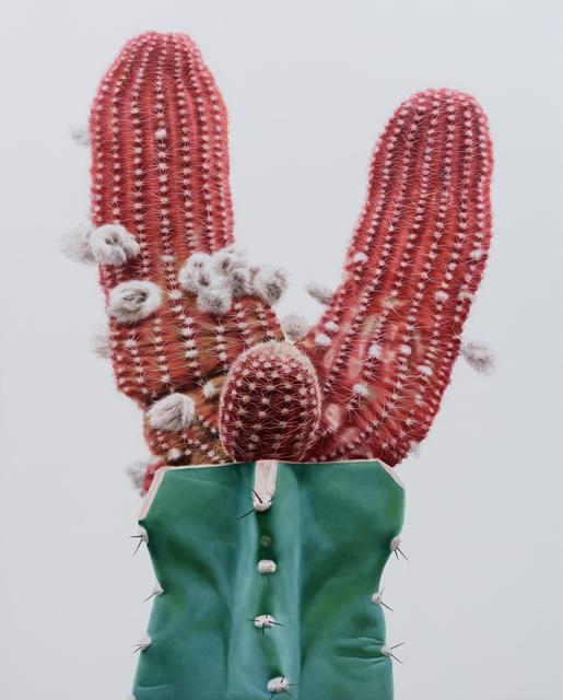 , 'Cactus No.96,' 2015, Johyun Gallery