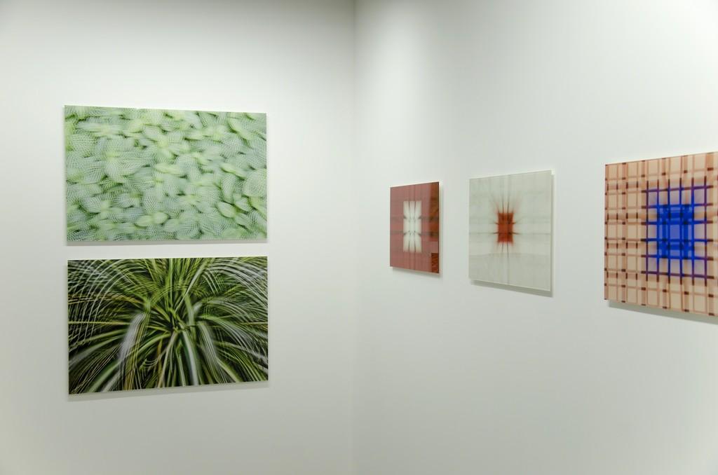 """Atsushi Okabe """"Artificial View_botanical"""" series, 2014"""