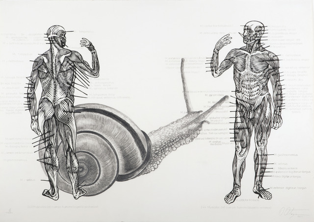 , 'Muscelos del cuerpo [The muscles of the body],' 2011, Childs Gallery