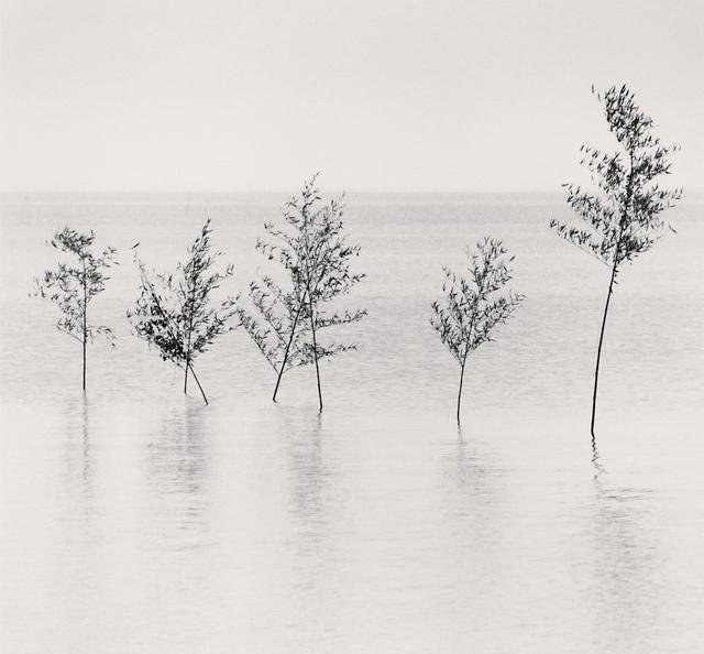 , 'Seven Trees, Misumi, Kyushu, Japan,' 2002, G. Gibson Gallery