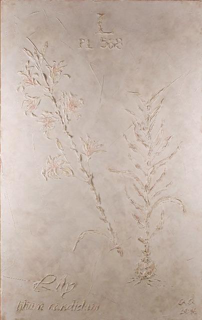 , 'Lily,' 2016-2017, Exhibit 320