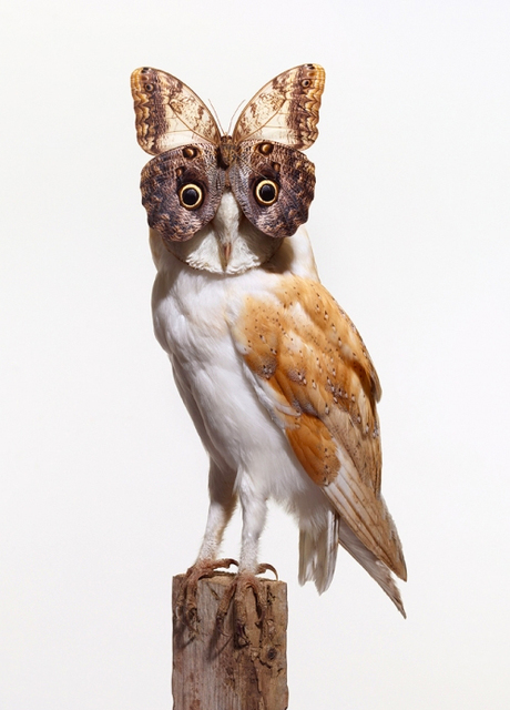 Nancy Fouts, 'Owl with Buttefly', 2012, Oliver Clatworthy Gallery Auction
