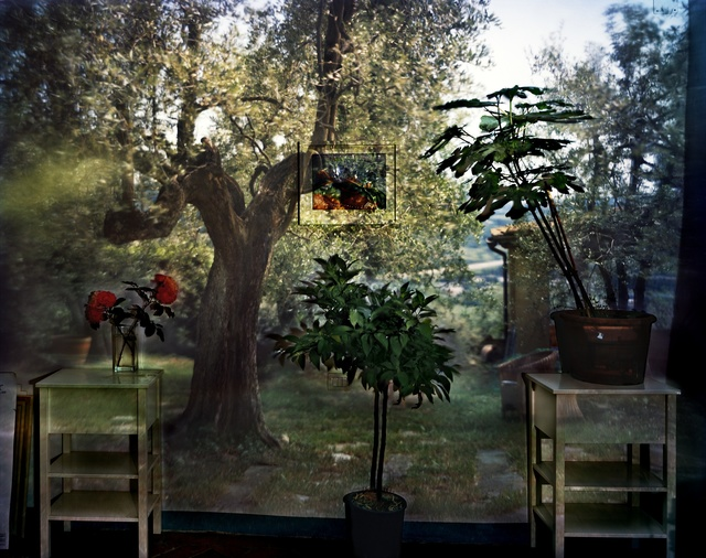 , 'Camera Obscura: Garden with Olive Tree Inside Room with Plants, Outside Florence, Italy,' 2009, Huxley-Parlour