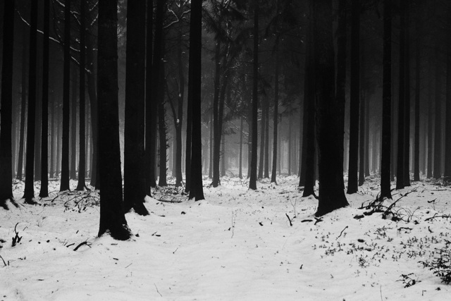 , 'Frozen Forest, Northern France,' 2012, Kahmann Gallery