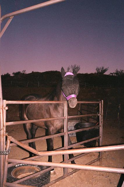 OK McCausland, 'Saguaro', 2019, Photography, 35mm color film, SHIM Art Network