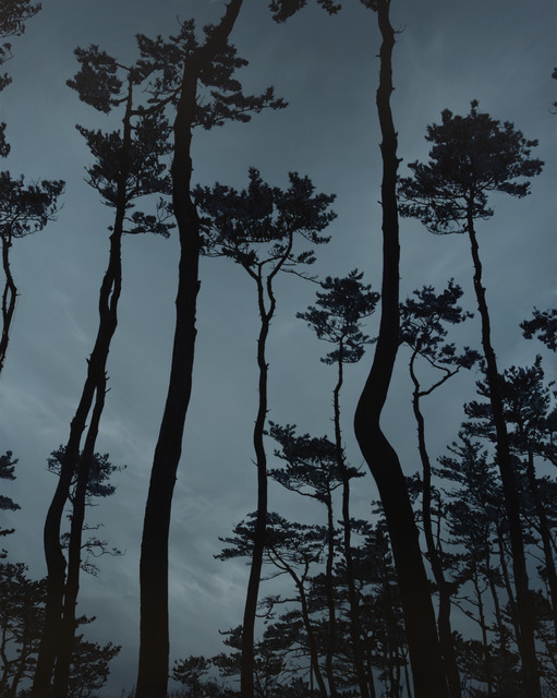 Kong Sung-Hun, 'A Pine Grove', 2013, Painting, Oil on Canvas, Gallery Ihn