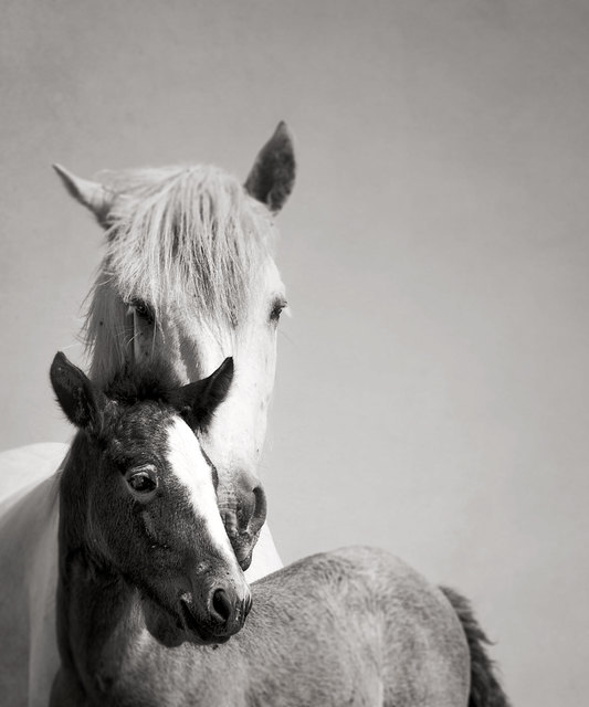 , 'Mare and Foal,' 2012, ArtStar