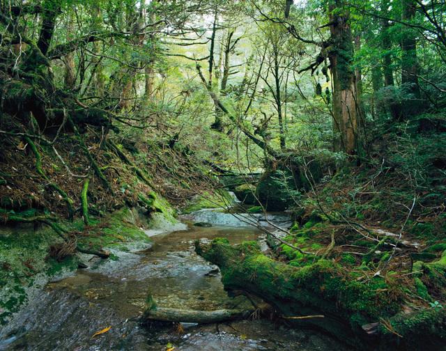 ", 'Onoaida 12, 30°18'1""N 130°31'28""E, Onoaida Trail, Yakushima, Japan, Fall, 2 October, 2016,' 2046, Benrubi Gallery"