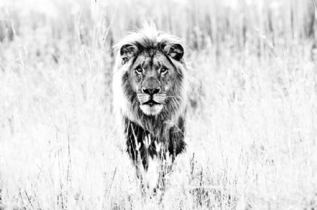 David Yarrow, 'The Ghost ', 2014, Maddox Gallery