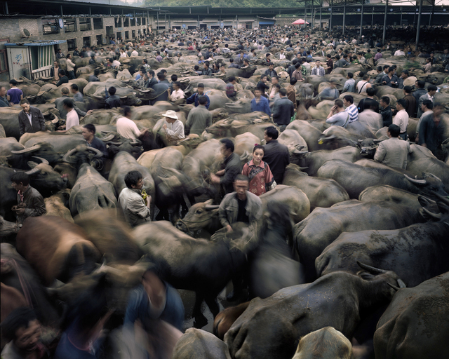 Qin Wen, 'Bull Market, Guizhou', 2012, Hyperion Press Ltd.