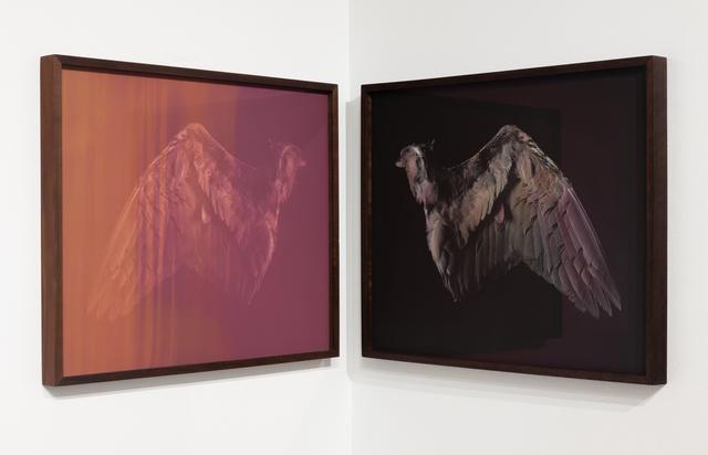 , 'Wing,' 2017, EUQINOM Gallery