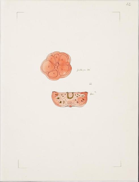 Gianfranco Baruchello, 'N. 12', 1990, Itineris