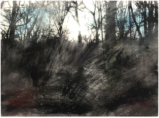 , 'Queens Wood 1.4,' 2016, Jealous Gallery