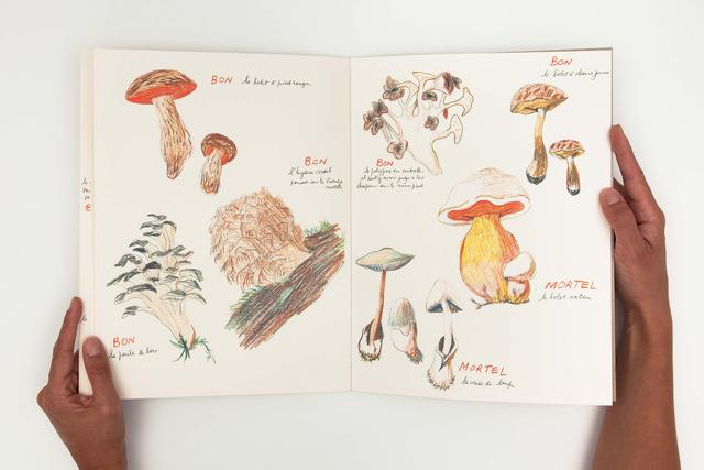 Annette Messager, 'Ma collection de champignons bons et champignons mortels ', 1973-2011, mfc - michèle didier