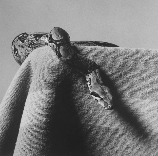 , 'Skippy (Boa Constrictor),' 1985, Mai 36 Galerie
