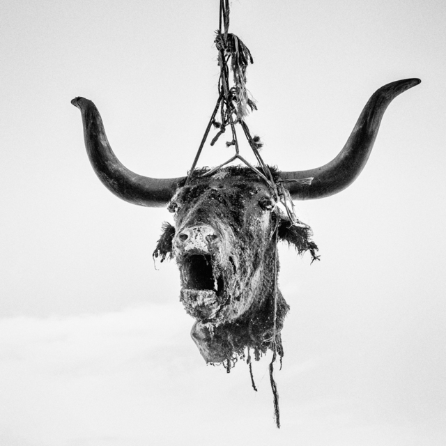 , 'Head of a dead bull hung to dry. Firebaugh, CA. ,' 2014, Anastasia Photo
