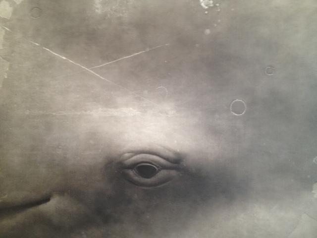 , 'Sperm Whale II,' 2013, Olsen Irwin