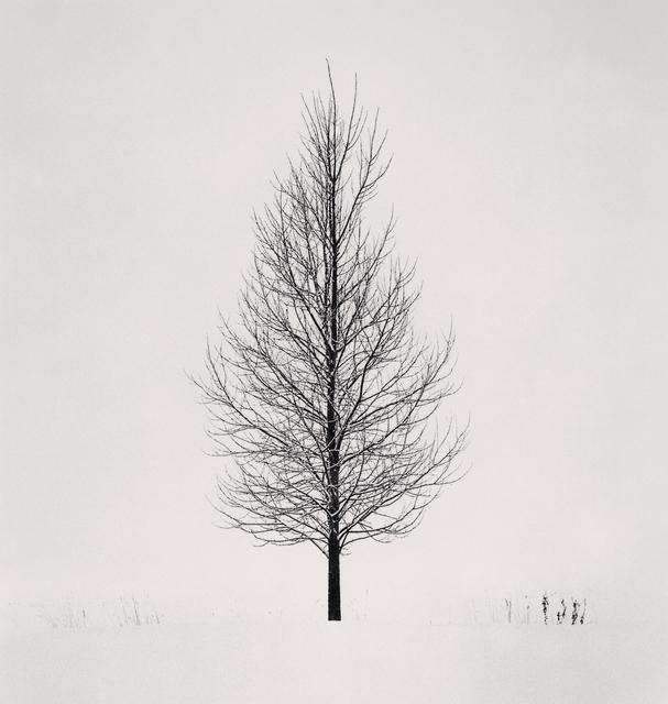 , 'Philosopher's Tree, Study 1, Biei, Hokkaido, Japan. ,' 2004, Blue Lotus Gallery