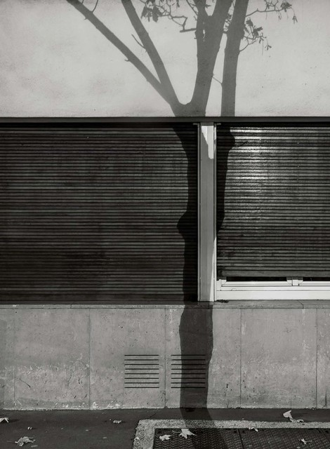 Michael Wolf, '#6, Paris Tree Shadows', 2014, GALLERY FIFTY ONE
