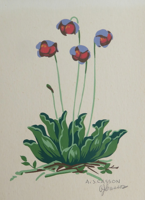 , 'Floral study - Blue and red flowers,' , Arctic Experience McNaught Gallery