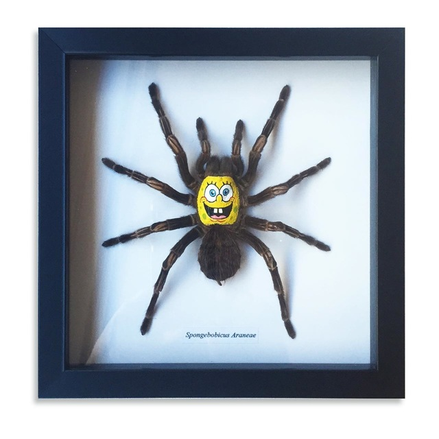 , 'Spongebobicus Araneae,' 2015, StolenSpace Gallery