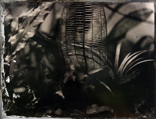, 'Immersion #78,' 2017, Hanson Howard Gallery