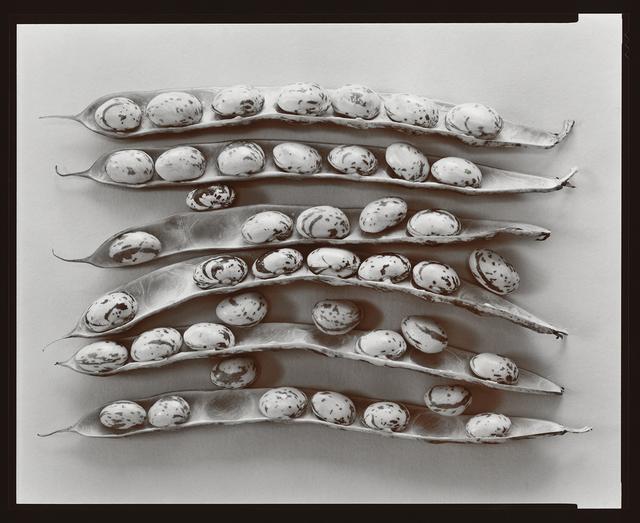 Olivia Parker, 'Shell Beans', 1979, Robert Klein Gallery