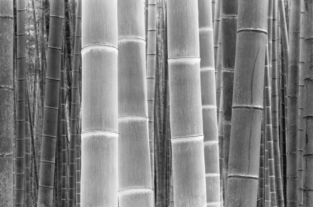 , 'Colors Of The Bamboo,' , Gallery 270