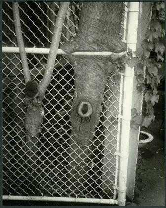 Andy Warhol, 'Tree Trunks', 1976-1987, Hammer und Partner