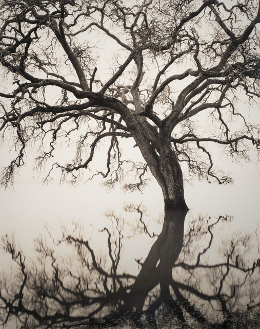 , 'Floating Oak,' 2005, The Ansel Adams Gallery