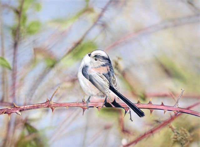 , 'Long Tailed Tit,' , Plus One Gallery
