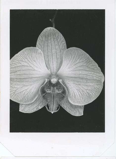 Gian Paolo Barbieri, 'Orchard, Milano', 2003,  29 ARTS IN PROGRESS gallery