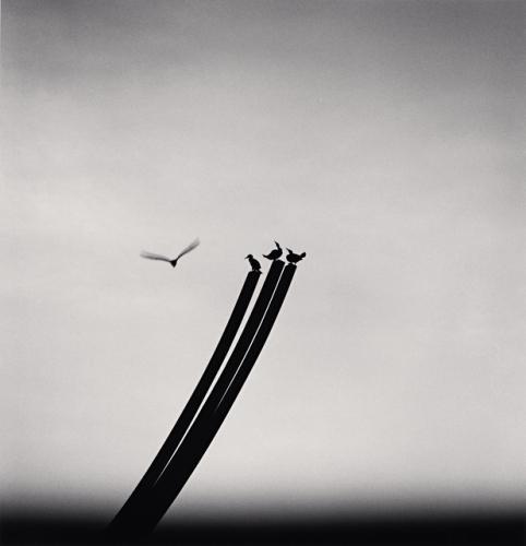 , 'FOUR BIRDS, ST NAZAIRE, FRANCE, 2000,' 2000, Huxley-Parlour