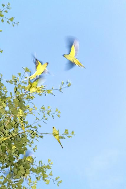 , 'Tokyo Parrots 009,' 2013, CHRISTOPHE GUYE GALERIE