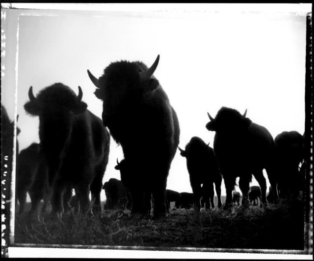 Donald Woodman, 'Where the Buffalo Roam', 1980s, Photography, Archival Pigment Print, Donald Woodman Studio