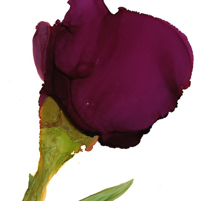 , 'Wine Rose,' , Chicago Art Source