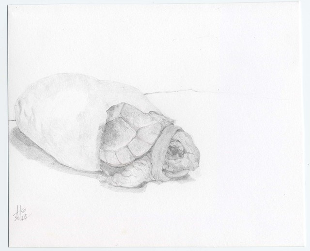 Heather Lancaster, 'Hatching Box Turtle', 2015, Spalding Nix Fine Art