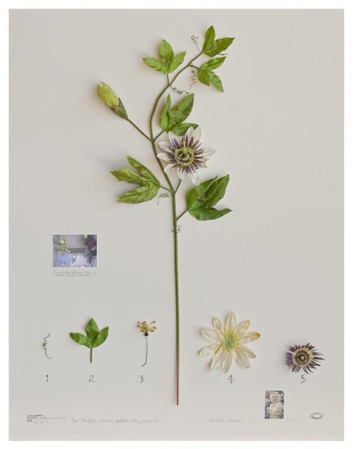 Alberto Baraya, 'Expedição Califórnia: Passiflora Monroe', 2012, Galeria Nara Roesler