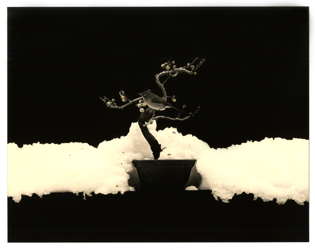 Yamamoto Masao, 'Kawa = Flow #1675', 2016, Atlas Gallery