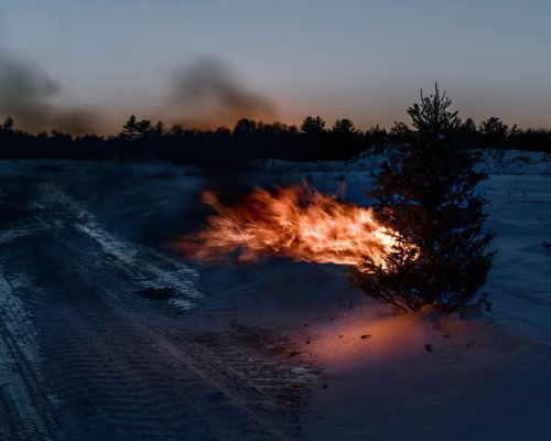 , 'Burning Tree,' 2016, Childs Gallery