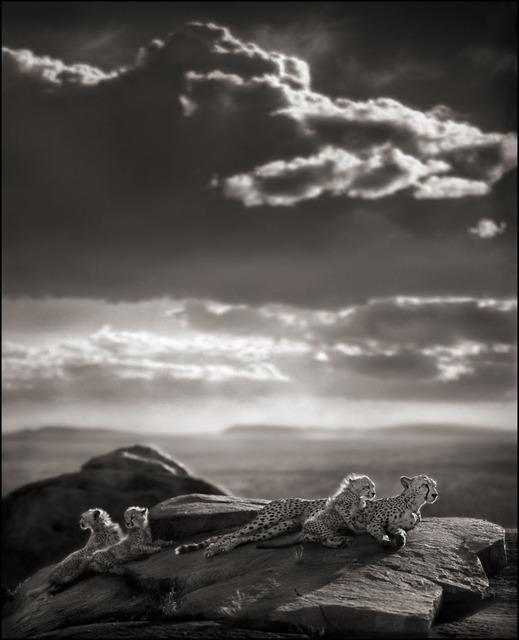 Nick Brandt, 'Cheetah & Cubs Lying on Rock, Serengeti 2007', 2007, photo-eye Gallery