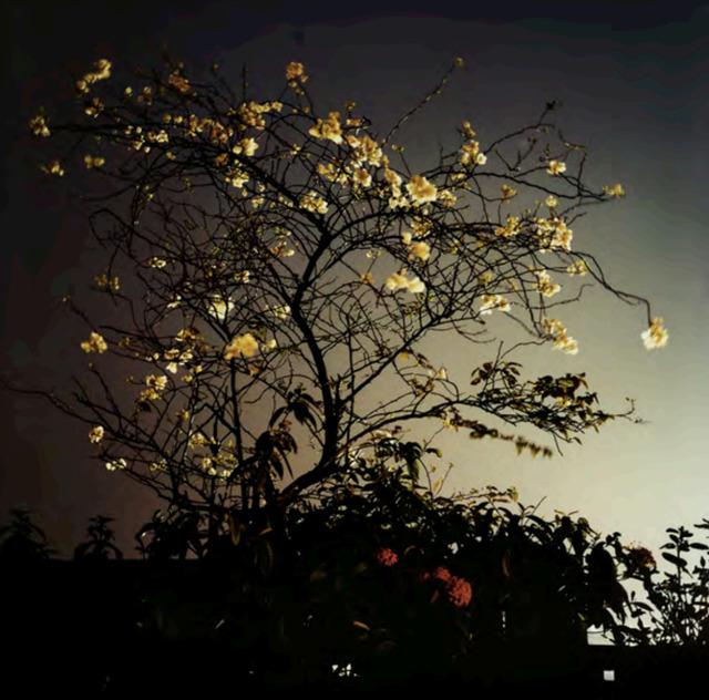 Dayanita Singh, 'Dream Villa (28)', ca. 2006-2008, Nature Morte