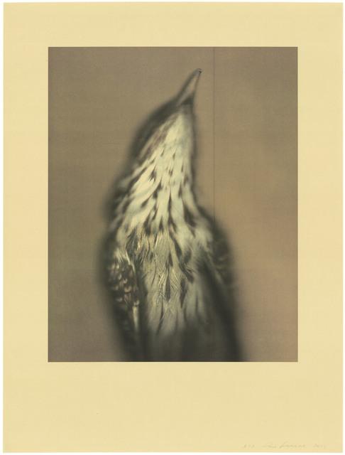 Ann Hamilton, 'Long-tailed Koel', 2021, Print, 7 color lithograph, Gemini G.E.L.